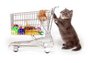 Супермаркет для животных - зоомагазин в Череповце