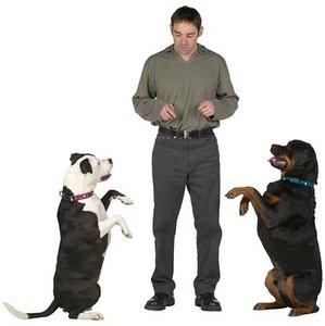Хендлинг собак в Череповце