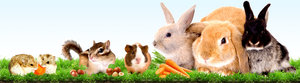 Корм для животных в Орске