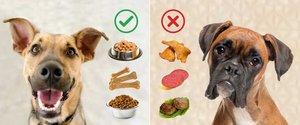 Чем можно и чем нельзя кормить собаку📍🐕