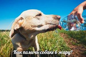Как помочь собаке в жару?