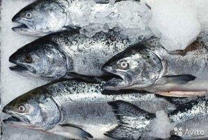 Продажа свежемороженой рыбы в Орске оптом