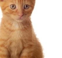 Витамины для кошек и собак: все лучшее и полезное для ваших питомцев!