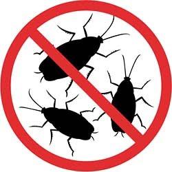 Уничтожение насекомых в квартире и офисах в Орске