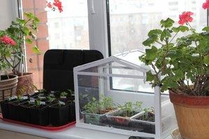 Купить компактный парник на подоконник для выращивания рассады