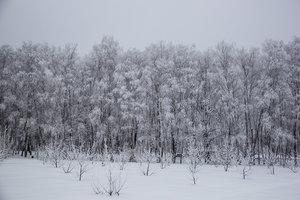 Приглашаем поучаствовать в фотовыставке «Природа толстовских мест»