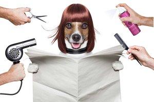 Парикмахерская для собак в Вологде. Работают профессионалы!