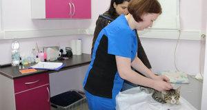 Ветеринар в Туле - круглосуточная помощь Вашим питомцам!