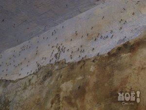 Подвальные комары