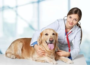 """Здоровье ваших питомцев, в наших надежных руках. Ветеринарная клиника """"ЗООДОКТОР""""."""