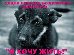 Акция помощи бездомным животным «Я хочу жить!»