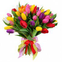 Тюльпаны всего по 33 рубля!