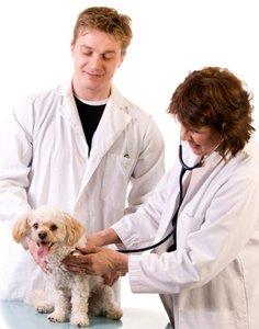 Ветеринар в городе Тула - настоящий друг Ваших питомцев!