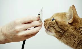 Лечение кошек в Орске. Лечение кота Орск