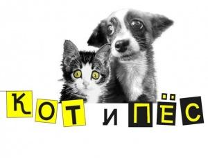 """Приют """"Кот и пес"""""""