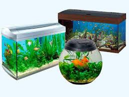 Самый большой в Орске ассортимент товаров для аквариумистики