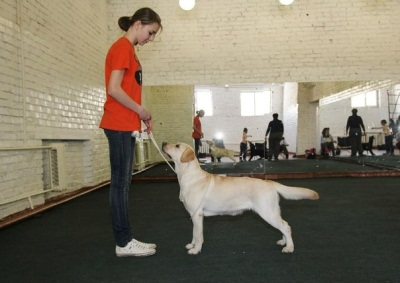 Хендлинг собак