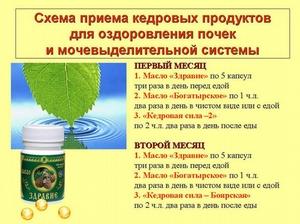 Здоровье вместе с кедром из Сибири! ЗДОРОВЫЕ ПОЧКИ – КРЕПКИЙ ОРГАНИЗМ! Главное-Здоровье! АРГО.