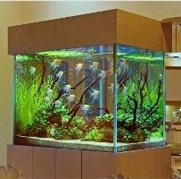 """Выбирайте аквариумы в магазине """"38 попугаев""""!"""