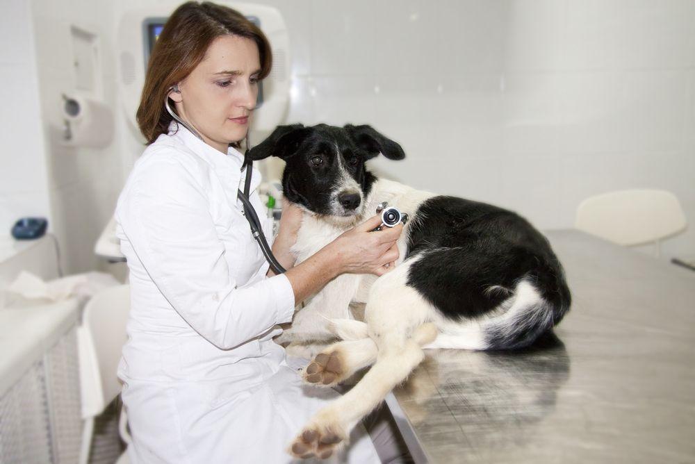 Профессия ветеринарного врача 5 фотография