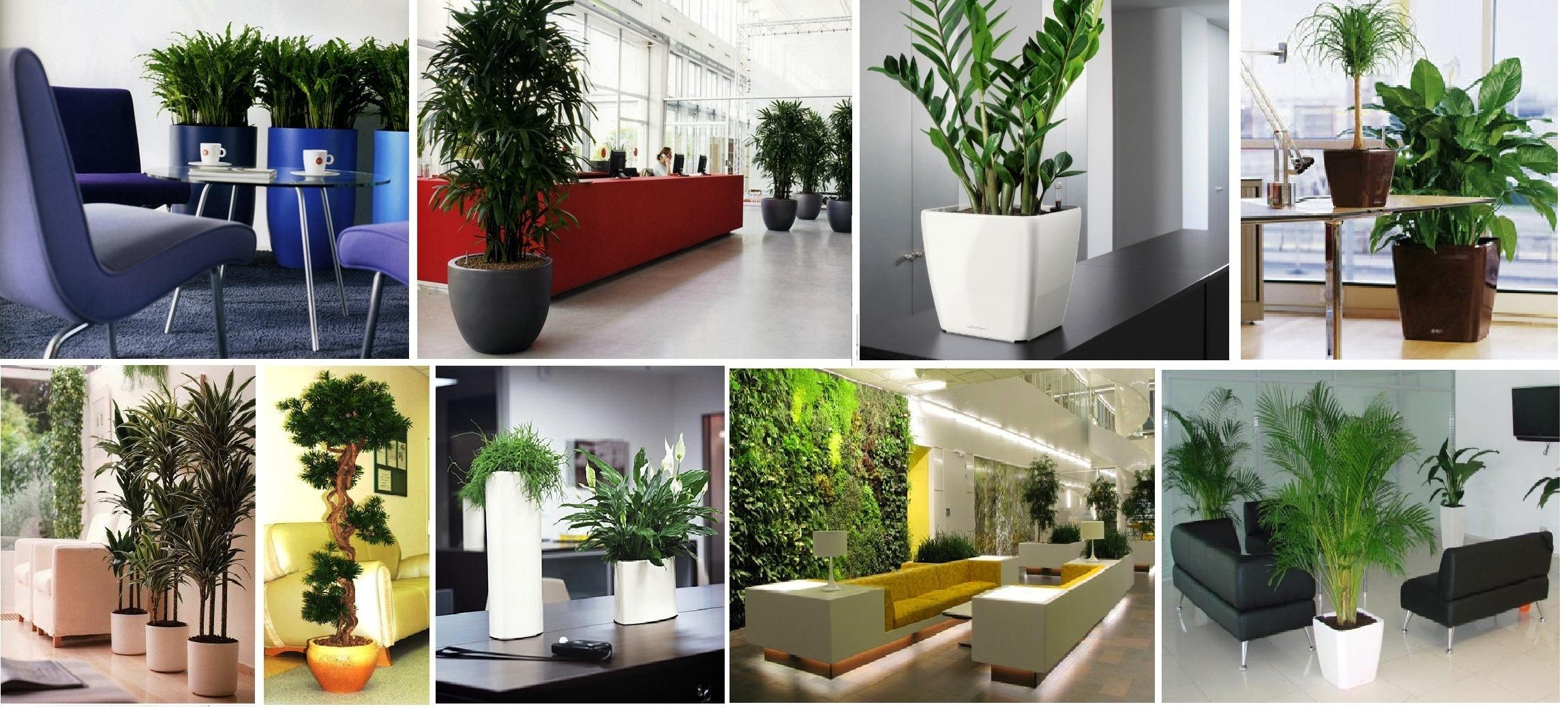 растения кемерово