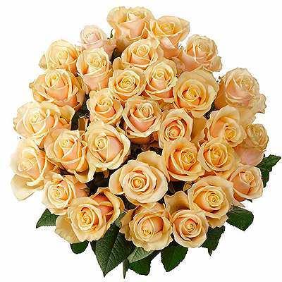 цветы розы
