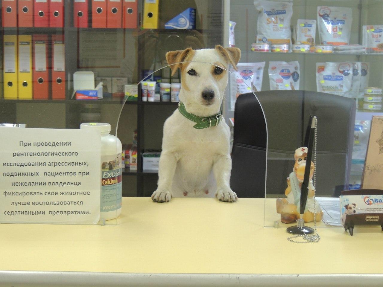 Ветеринарные клиники кот и пес отзывы