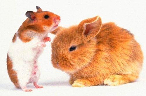 исследования животных в туле