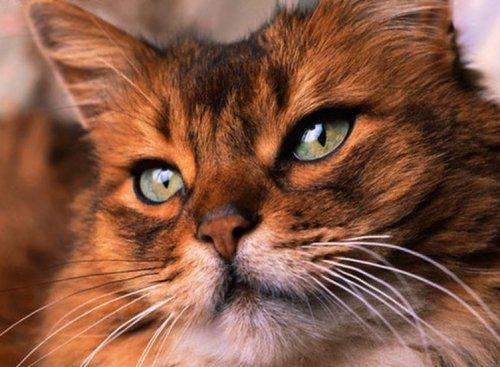 операции кошке в туле