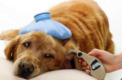 ветеринарная помощь тула