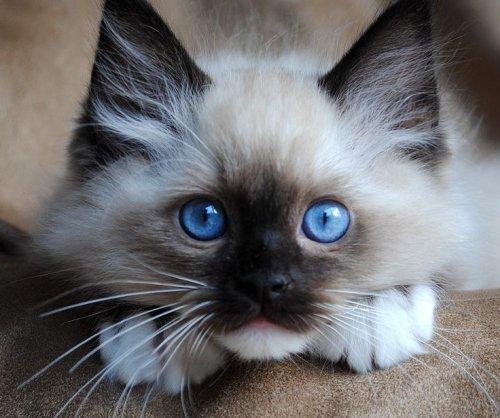 лечение кошек в туле