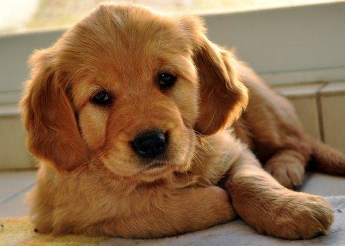 операции собаки в туле