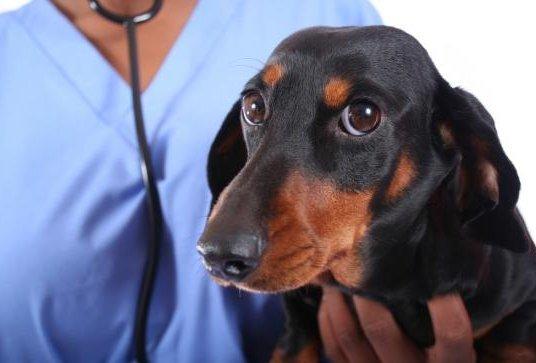 анализы собакам в туле