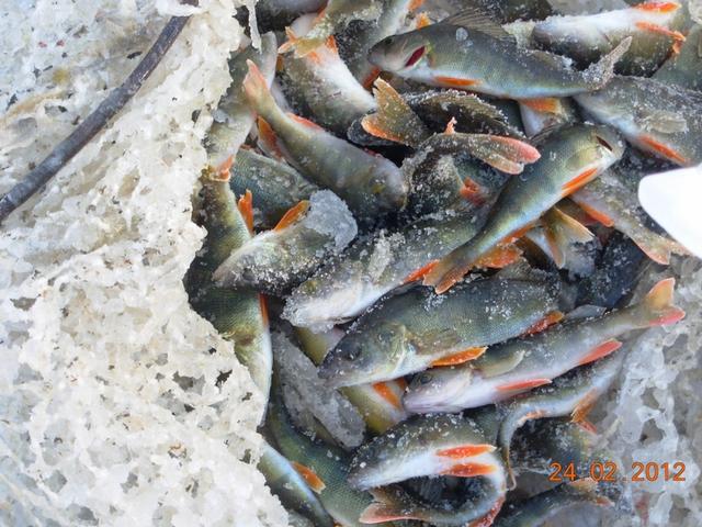как ловить рыбу когда замор