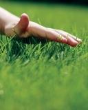 Где купить газон в Красноярске?