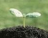 Подходящая почва: основа любого озеленения
