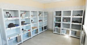 Ветеринарный стационар для животных в Оренбурге