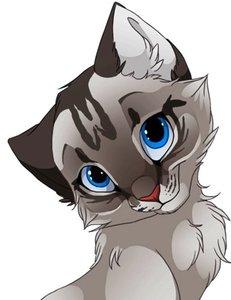 Операции кошке в Туле проводят квалифицированные специалисты!