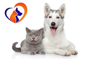 Услуги стерилизации кошек и собак