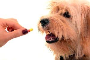 Ветеринарные препараты в Оренбурге