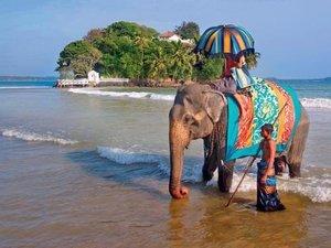 Туры в Индию по выгодной цене!