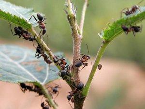 Избавление от муравьев в Вологде