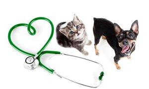 Хорошая ветеринарная клиника в Череповце