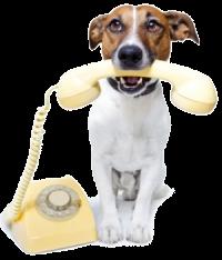 Записаться к ветеринару в Череповце