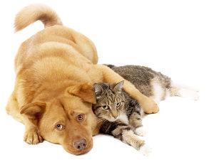 Кастрация котов и собак в Череповце