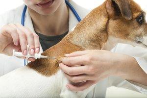 Для чего нужно чипирование животных?