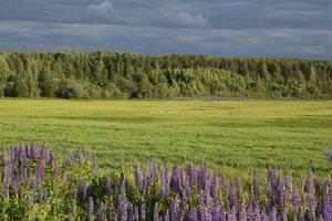 Получить земельный участок в рамках проекта «Вологодский гектар»