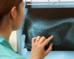 Срочный рентген для животных в Туле