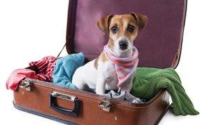 Стационар и гостиница для животных на отпуск
