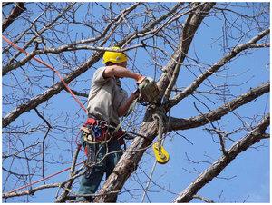 Убрать аварийное дерево в Вологде